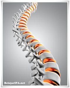 Cara Mencegah Osteoporosis dan Pentingnya Pencegahan Sejak Dini