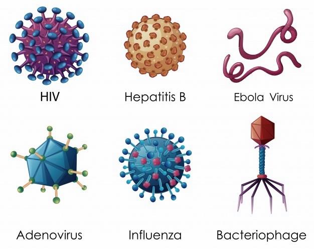 Senyawa Kimia Pembangun Bakteriofage T4 Adalah Dna Dan ...