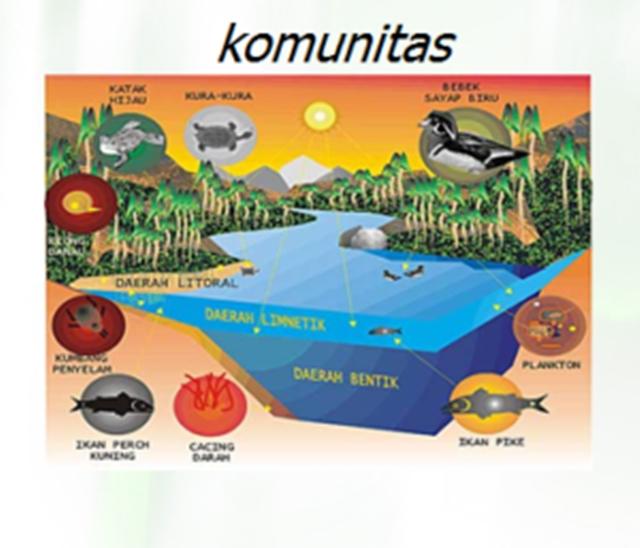 Contoh Struktur Organisasi Komunitas Sawah