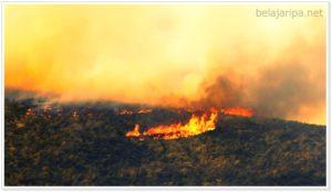 Bensin Diesel Pembakaran Hutan