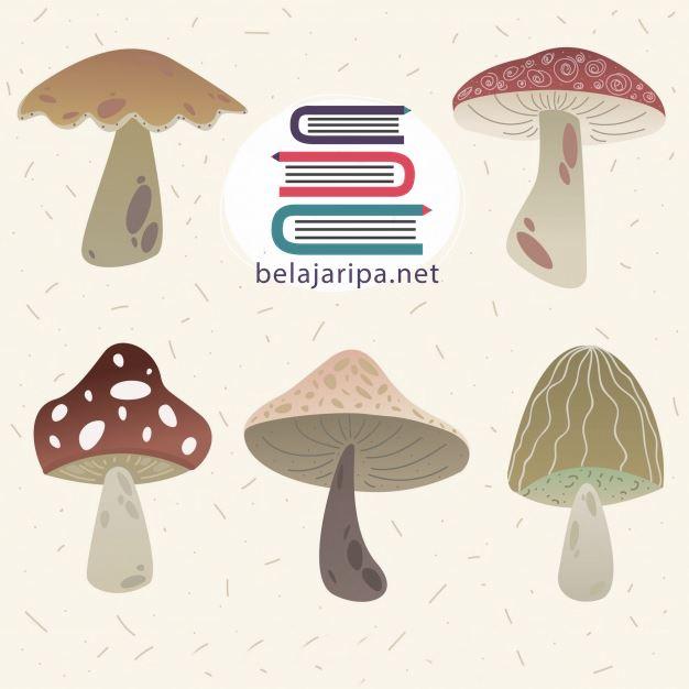 Mengenal Ciri Ciri Fungi Pengertian, Karakteristik, Manfaat, serta Peranan Menguntungkan dan Merugikan