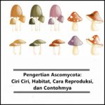 Pengertian Ascomycota: Ciri Ciri, Habitat, Cara Reproduksi, serta Contoh Jamur Ascomycotina