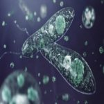 Protista Mirip Hewan: Ciri, Habitat, Contoh, serta Reproduksi Ciliata, Sporozoa, Flagellata, dan Rhizopoda