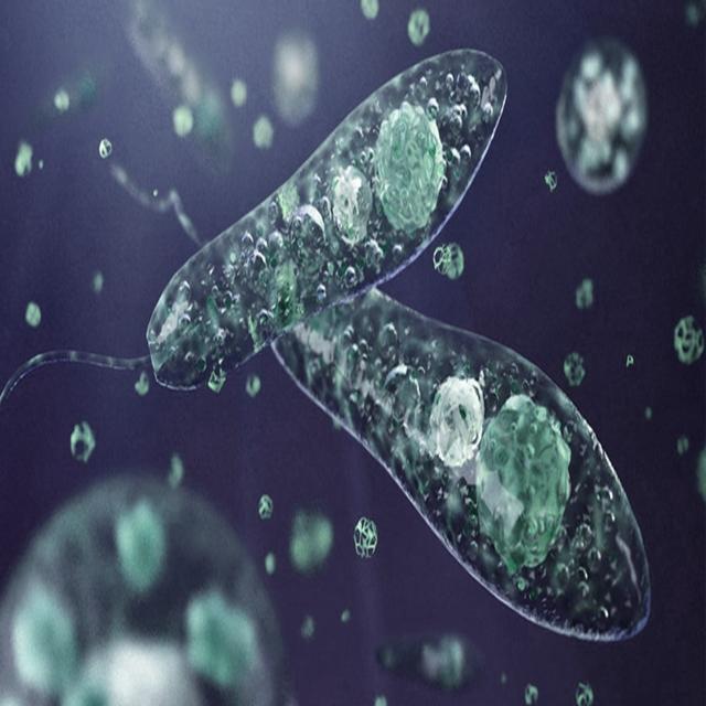 Protista Mirip Hewan Ciri, Habitat, Contoh, serta Reproduksi Ciliata, Sporozoa, Flagellata, dan Rhizopoda